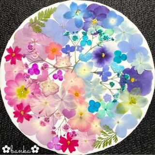 ✿押し花素材✿ピンク&ブルー系アソート【40枚】