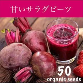 大人気!◆甘い♡サラダビーツ◆育てやすい健康野菜【有機種子 50粒】(その他)