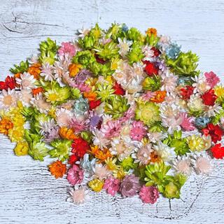 在庫処分★スターフラワーブロッサム 約200粒 ドライフラワー花材 G(ドライフラワー)