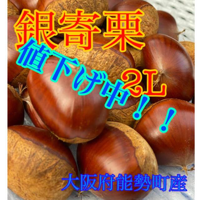 栗 銀寄栗 2L 食品/飲料/酒の食品(野菜)の商品写真