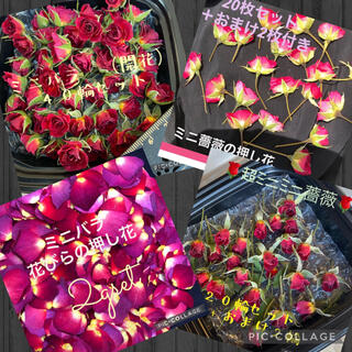 Herbarium-mk様専用★開花40&超ミニミニ22&押し花22&花びら2g(ドライフラワー)