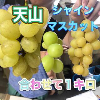 シャインマスカットと天山 家庭用 1キロ 長野県産 減農薬 章わんぱく農園