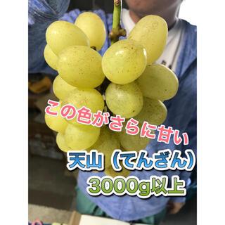天山(てんざん) 家庭用 3キロ 長野県産 減農薬 章わんぱく農園