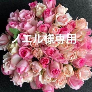 鮮度抜群!バラ・切り花・生花*ピンクアレンジMIX*60本 長さ30㎝SMサイズ(その他)