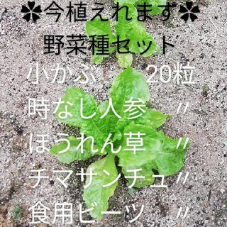 今植えれます✿野菜種セット②✿(野菜)
