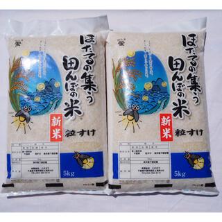 新米 粒すけ 無洗米 10kg 令和三年 新品種