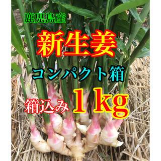 新生姜 箱込み1kg  減農薬栽培(野菜)