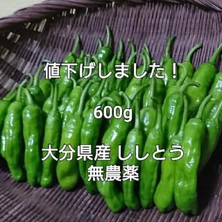 まもなく終了! 600g(140本前後) 大分県産 ししとう 無農薬(野菜)