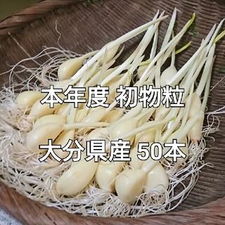 本年度 国産粒使用 50本 大分県産 スプラウトにんにく(野菜)