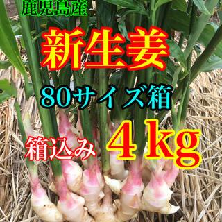新生姜 箱込み4kg   減農薬栽培(野菜)