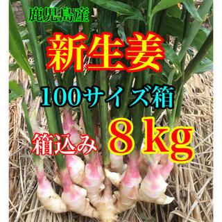 新生姜 箱込み8kg  減農薬栽培 鹿児島産(野菜)