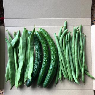 農家直送野菜セット ラディシュ、きゅうり、ミニトマト、いんげん(野菜)