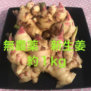 朝採り旬野菜 新生姜 約1kg(野菜)