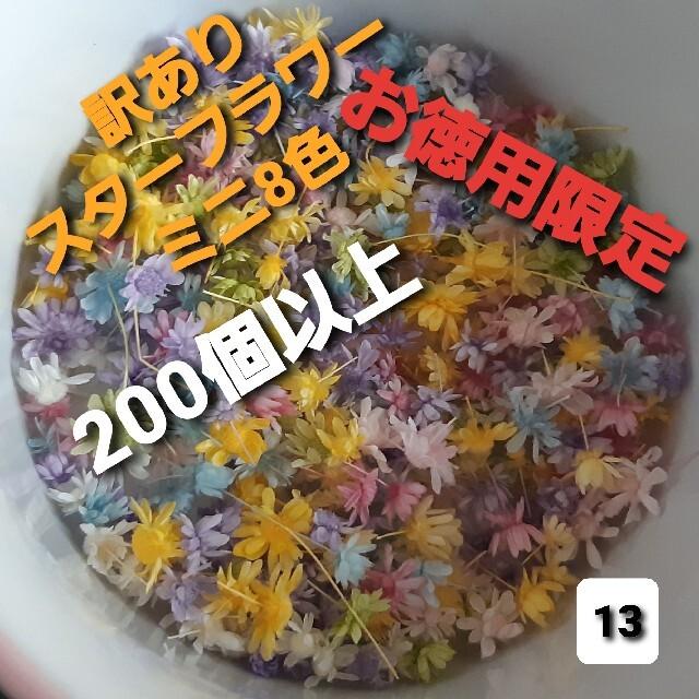 訳あり13スターフラワーミニ8色 200個以上 ハンドメイドのフラワー/ガーデン(ドライフラワー)の商品写真