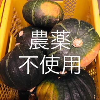 農薬不使用!北海道産かぼちゃ3kg