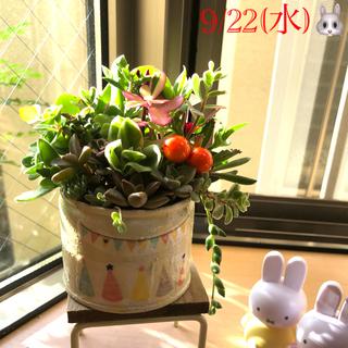 多肉植物❤︎寄せ植え❤︎このまま飾れます♪