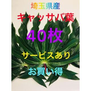 埼玉県産キャッサバ葉40枚(野菜)