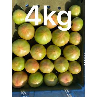 わけありトマト4キロ