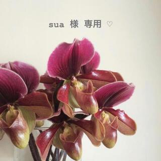 セザンヌケショウヒン(CEZANNE(セザンヌ化粧品))のsua 様 専用 ☺︎(化粧下地)