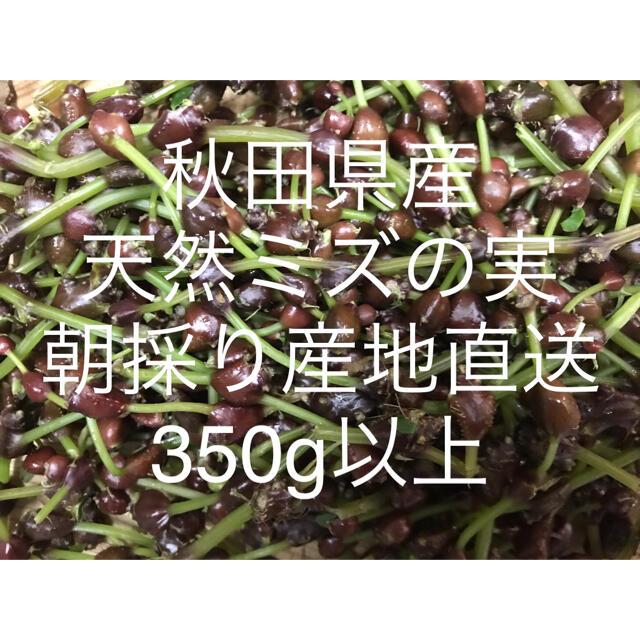 秋田県産 ミズの実 ミズのコブ350g以上     新鮮産地直送 食品/飲料/酒の食品(野菜)の商品写真