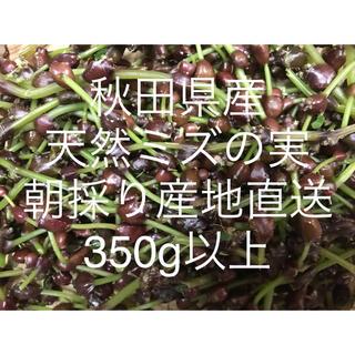秋田県産 ミズの実 ミズのコブ350g以上     新鮮産地直送