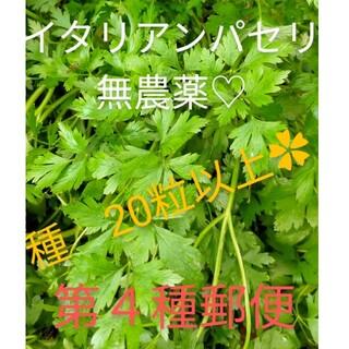 無農薬♡イタリアンパセリ✿(野菜)