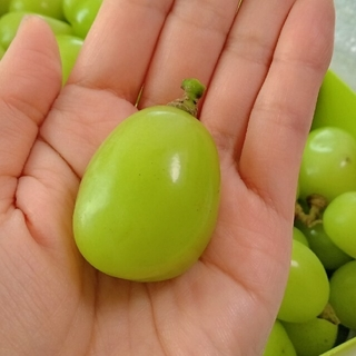 シャインマスカット【山梨県産】約1キロ(フルーツ)