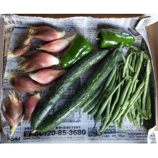 無農薬野菜セット