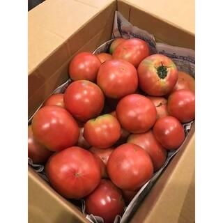 産地直送 減農薬トマト 桃太郎 約6kg 24個〜 はねだし 訳あり