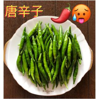 無農薬 唐辛子【鹰の爪…タカノツメ】(野菜)