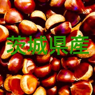 茨城県産 栗 2Lサイズ1.3キロ(野菜)