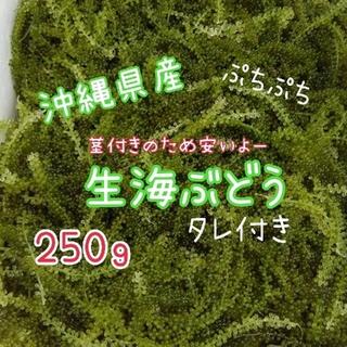 ☆送料無料☆ 沖縄県産 海ぶどう 茎付き250g(野菜)