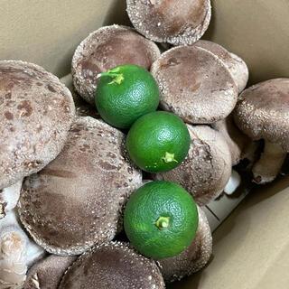 数量限定すだち3個付き肉厚大椎茸1000グラム冷蔵送料込み(野菜)