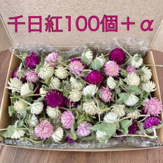 千日紅100個+α【若干茎付き・葉付き】ドライフラワー(ドライフラワー)
