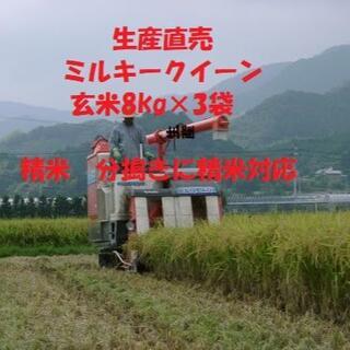 令和3年産新米ミルキークイーン玄米24kg 白米に精米または分搗き精米対応