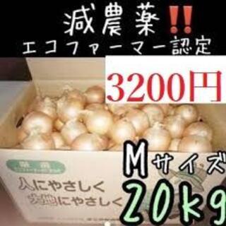 北海道産玉ねぎ Mサイズ 20kg(野菜)