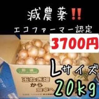 北海道産 玉ねぎ Lサイズ 20kg(野菜)