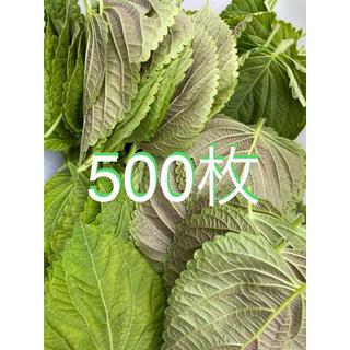無農薬えごまの葉500枚(野菜)