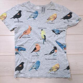ジムマスター(GYM MASTER)のgym master Tシャツ 鳥 sサイズ(Tシャツ(半袖/袖なし))