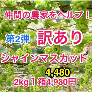 ◆第2弾!仲間の葡萄農家ヘルプ(山梨産)訳ありシャインマスカット2キロ箱