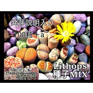 【これから蒔時】リトープス ミックス 種子 100粒+a 発芽説明入り(その他)