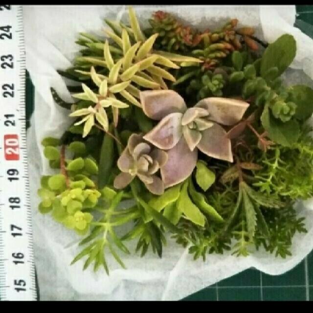多肉植物 詰め合わせ 色々 ハンドメイドのフラワー/ガーデン(プランター)の商品写真