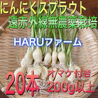 無農薬 遠赤外線栽培 ニンニクスプラウト 発芽ニンニク 大中粒20本(野菜)