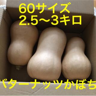 バターナッツかぼちゃ60サイズ2.5~3.0キロ!☆完全無農薬!(野菜)