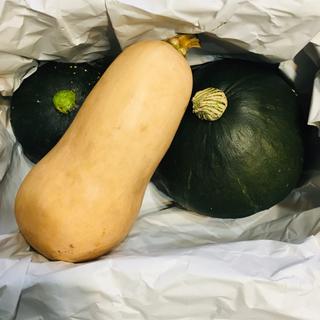 自然栽培 バターナッツかぼちゃ(野菜)