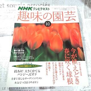 【美品】NHK 趣味の園芸 2008年 10月 今が植えどき春に咲く球根(専門誌)