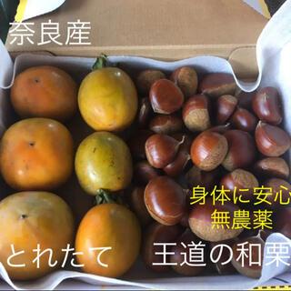 とれたて無農薬の和栗500gと柿6個(フルーツ)