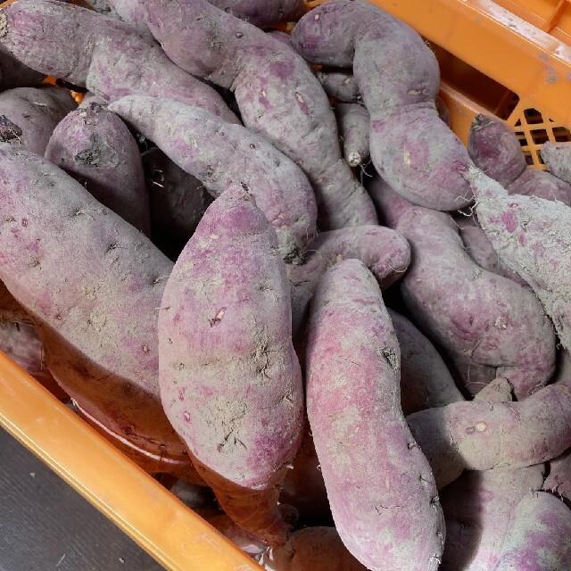 紅はるか 5.5kg 新物 サツマイモ 食品/飲料/酒の食品(野菜)の商品写真