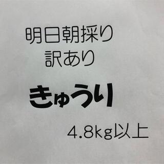 月曜日朝採り 訳ありきゅうり 4.8kg(野菜)