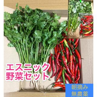 野菜セット【唐辛子、パクチー】【無農薬☆朝摘み☆収穫当日発送】(野菜)